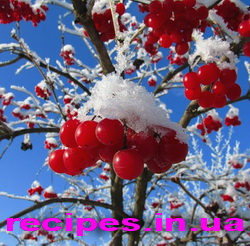 Заготовка калины на зиму рецепты